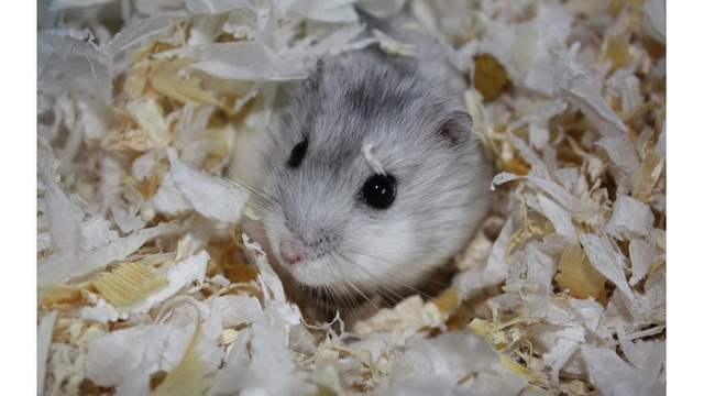 Florida woman flushes pet hamster down airport toilet after being denied passage