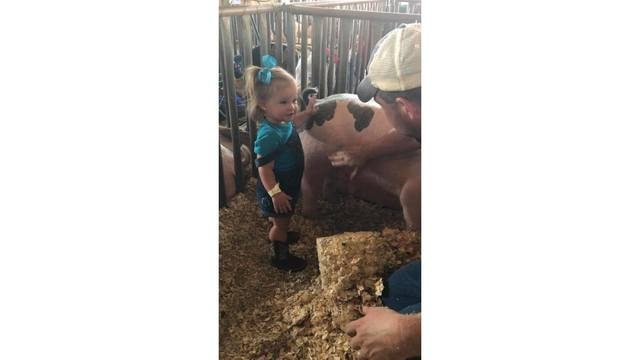 Grace Coalson in the pig stall petting a pig from Hannah Coalson_1534188851759.jpg.jpg