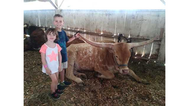8-14-18 Colton and Layla VanGilder checking out the steer from Stacey VanGilder_1534263231228.jpg.jpg