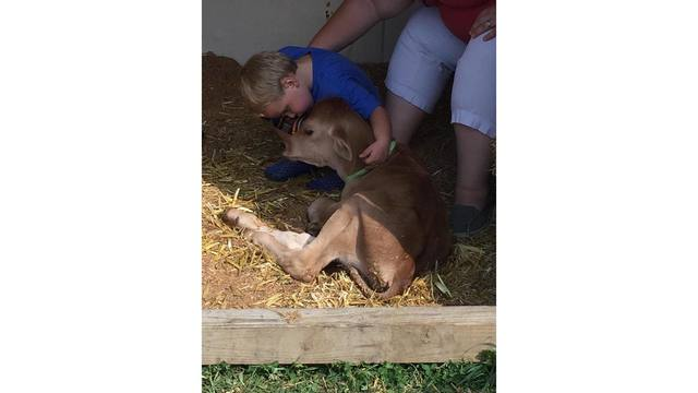 Aeron Kessler 2, giving the baby cow a kiss from Jessica Denny_1534282130206.jpg.jpg