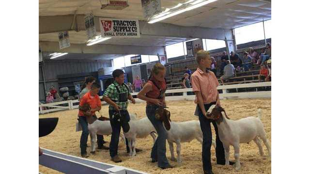 Dayne all the way to the right showing at the market goat competition from Jennifer Perry_1534282139219.jpg.jpg