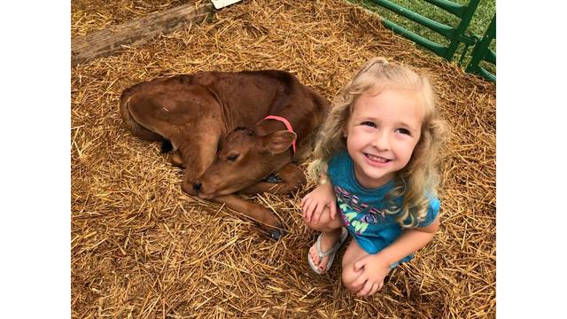 Kenli Hatfield, 4, making friends w a baby calf from Andria Hatfield_1534281976664.jpg.jpg