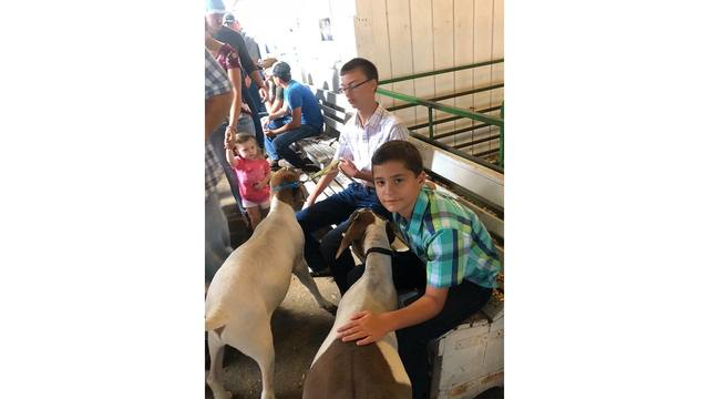 My boys with their 4-H Market goats at the fair from Missy Burdette_1534282128697.jpg.jpg