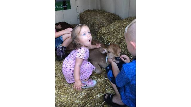 Two year old Izzy Alderman is so excited petting the brand new calves from Katy Alderman_1534282108019.jpg.jpg