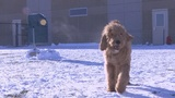 How to keep your pets safe in the frigid temperatures